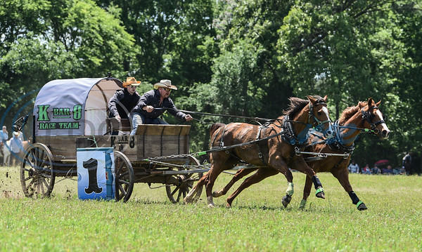 The K Bar 8 Race Team barely misses a barrel during a race at the 1836 Chuckwagon Races in Neches. The event was held at Diamond B Ranch on Saturday, April 27 with winning teams competing in the finals on Sunday, April 28. (Jessica T. Payne/Tyler Morning Telegraph)