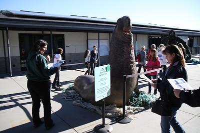 Marine Mammal Center Jan 12th 32 of 38