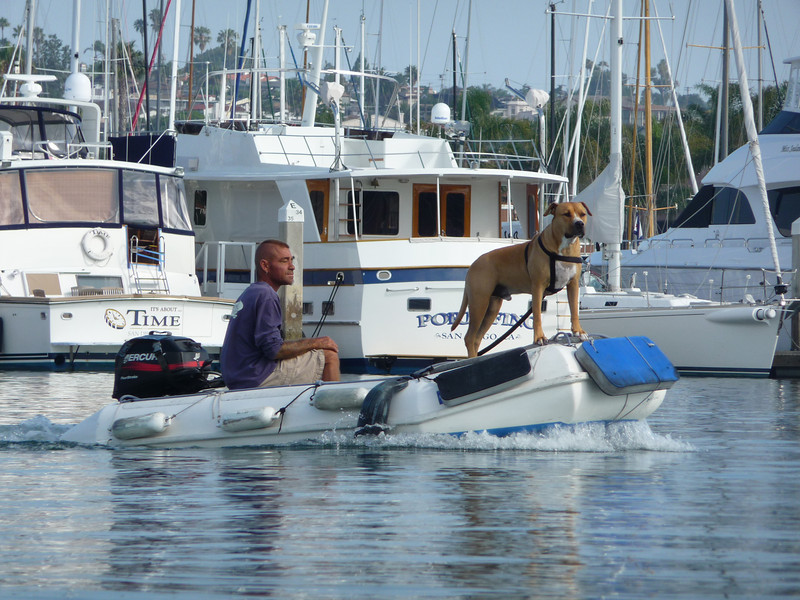The first of many dogs on the water.  It was fun to see them all out and about.