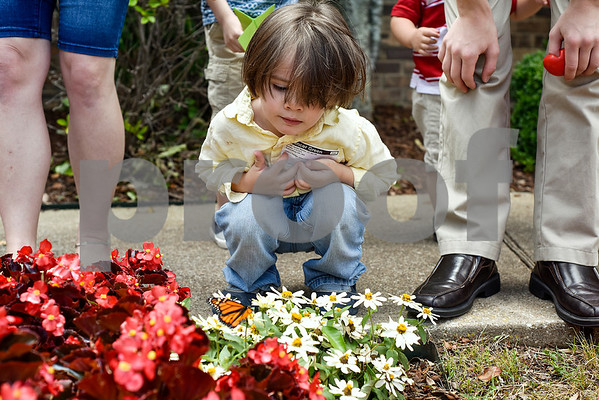 Spencer Green, 3, looks at a monarch butterfly during a butterfly release at Colonial Hills Baptist Church in Tyler, Texas, on Sunday, May 14, 2017. Joel Enge has been raising butterflies as a hobby for 16 years and typically does a butterfly release each year with either his students or his church. (Chelsea Purgahn/Tyler Morning Telegraph)