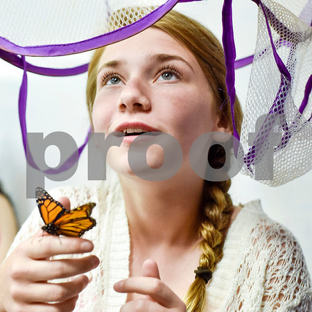 Joel Enge, not pictured, puts a mesh laundry basket full of monarch butterflies over Gracie Cearley's, 12, head as she holds a monarch butterfly on her finger at Colonial Hills Baptist Church in Tyler, Texas, on Sunday, May 14, 2017. Enge has been raising butterflies as a hobby for 16 years and typically does a butterfly release each year with either his students or his church. (Chelsea Purgahn/Tyler Morning Telegraph)