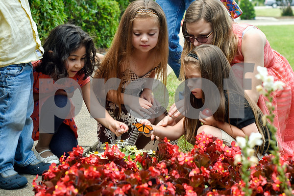 Children gather around a monarch butterfly during a butterfly release at Colonial Hills Baptist Church in Tyler, Texas, on Sunday, May 14, 2017. Joel Enge has been raising butterflies as a hobby for 16 years and typically does a butterfly release each year with either his students or his church. (Chelsea Purgahn/Tyler Morning Telegraph)