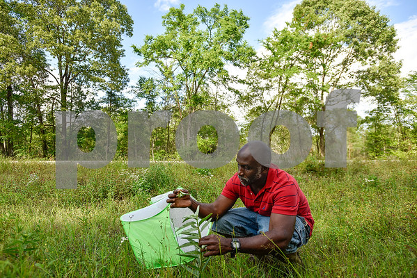Joel Enge picks a milkweed bloom on the side of a county road in Tyler, Texas, on Wednesday, April 19, 2017. Enge has been raising butterflies as a hobby for 16 years and typically does a butterfly release each year with either his students or his church. (Chelsea Purgahn/Tyler Morning Telegraph)