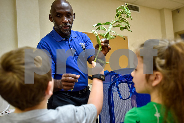 Joel Enge shows kindergarten Sunday school students milkweed, what monarch caterpillars eat, at Colonial Hills Baptist Church in Tyler, Texas, on Sunday, May 14, 2017. Enge has been raising butterflies as a hobby for 16 years and typically does a butterfly release each year with either his students or his church. (Chelsea Purgahn/Tyler Morning Telegraph)