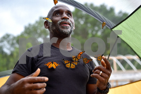 Joel Enge collects monarch butterflies to put on him for a portrait at Kingdom Life Academy's garden in Tyler, Texas, on Friday, May 12, 2017. Enge has been raising butterflies as a hobby for 16 years and typically does a butterfly release each year with either his students or his church. (Chelsea Purgahn/Tyler Morning Telegraph)