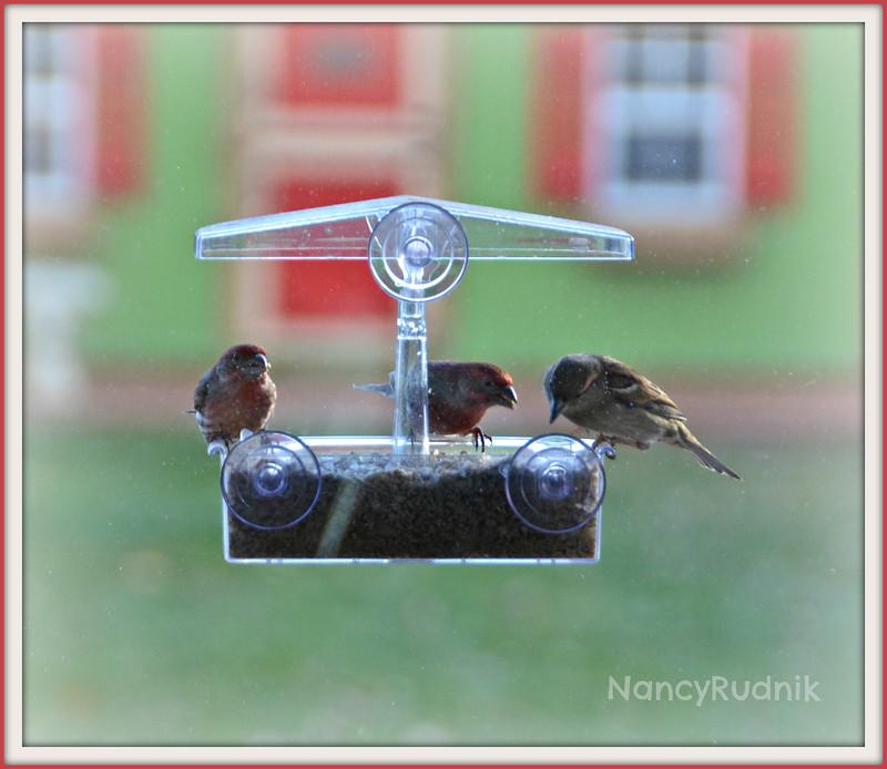 Week #1 - Birds in my Window Feeder