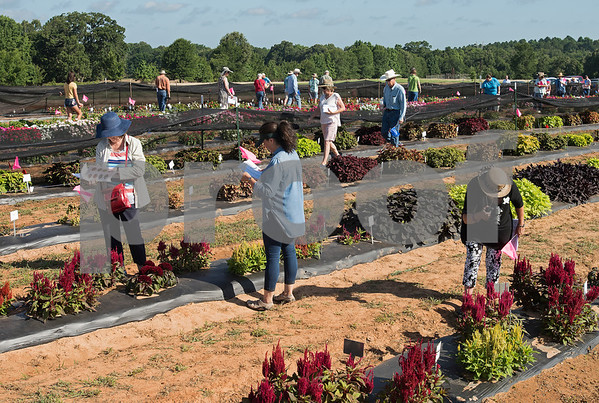 East Texas Horticultural Field Day