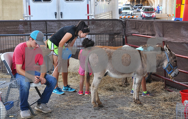 A young girl enjoys the petting zoo at the 34th Annual Tomato Fest in Jacksonville on Saturday, June 9. The festival also included several tomato contests, vendor booths and live music. (Jessica T. Payne/Tyler Paper)