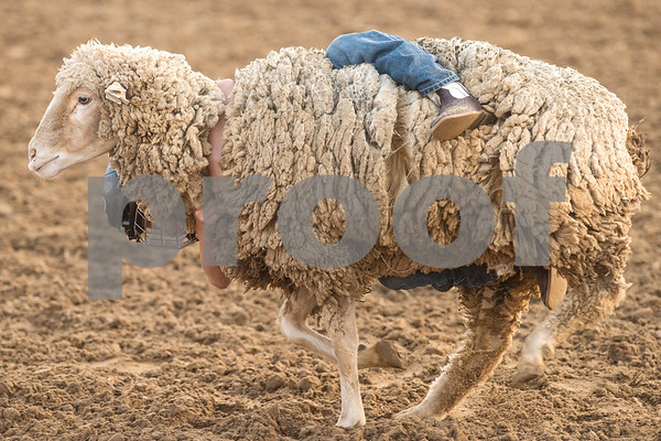 A boy holds onto a sheep during a mutton bustin' competition at the 81st Gladewater Round-Up Rodeo in Gladewater, Texas, on Wednesday, June 6, 2018. The rodeo events of the evening were mutton bustin', calf scrambles and bull riding. (Chelsea Purgahn/Tyler Morning Telegraph)