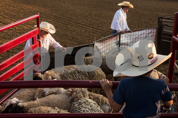 A boy looks on as men get sheep ready for mutton bustin' at the 81st Gladewater Round-Up Rodeo in Gladewater, Texas, on Wednesday, June 6, 2018. The rodeo events of the evening were mutton bustin', calf scrambles and bull riding. (Chelsea Purgahn/Tyler Morning Telegraph)