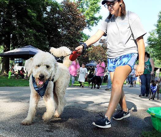 John P. Cleary | The Herald Bulletin<br /> Madison County's first American Cancer Society Bark For Life event was held Saturday at Beulah Park in Alexandria. Here Duke, a one-year-old labradoodle, leads Celeste Phelps around the path on the first lap of the walk.