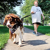 John P. Cleary | The Herald Bulletin<br /> Molly pulls on the leash as her master, Connie Johnson, follows behind as they  walk laps around Beulah Park Saturday for the American Cancer Society Bark For Life event.