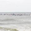110911-Surfer's Way-578