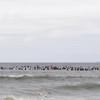110911-Surfer's Way-569