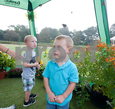 photo by Sarah A. Miller/Tyler Morning Telegraph  Cousins Jake Lesh, 2, and Christian Phillips, 2, both of College Station, watch butterflies fly inside of a small tent before the start of the Alzheimer's Alliance of Smith County's first ever butterfly release event at the Tyler Rose Garden Thursday.  The public was invited to make a donation of 25 dollars each per butterfly.  Over 1,100 butterflies were released to honor and commemorate lives touched by Alzheimer's disease and other dementias in Smith County.
