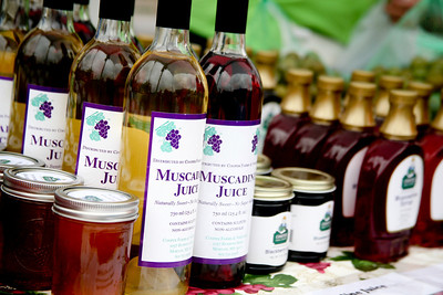 Fresh Muscadines  Ms State Fair Blue Homemade Jelly Winners Tim Cooper Farm & Vineyard