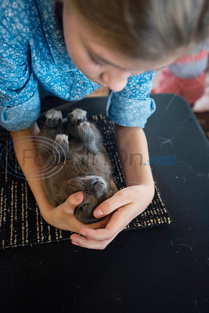 Isabelle Savage, 10, of LaRue, calms down an energetic Polish rabbit before the start of the Junior Rabbit Show at the East Texas State Fair in Tyler on Tuesday Sept. 24, 2019.  (Sarah A. Miller/Tyler Morning Telegraph)
