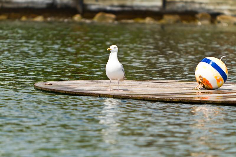 A Day On Bonks Boat-4213.jpg