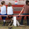 Record-Eagle/Douglas Tesner<br /> Allyson Clark, 11, left, Taylor Henriet, 12, and Koni Schlabach, 11, sit on a bench at the horse show while their dogs Zoe and Miley play underneath.