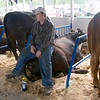 Record-Eagle/Douglas Tesner<br /> Adam DeRosha, 16, takes a seat on a big hunk of beef at Northwestern Michigan Fair.