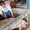 Record-Eagle/Douglas Tesner<br /> Cody Foster, 12, grooms his pig before showing it in competition at the Northwestern Michigan Fair.