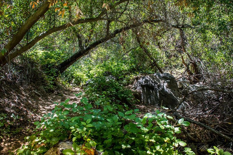 Skyline Drive Trail, Corona