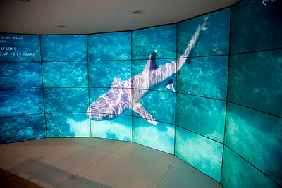 Woodside's exhibit tells of its care for the Great Barrier Reef.