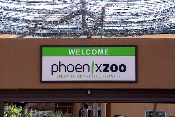 A trip to the Phoenix Zoo