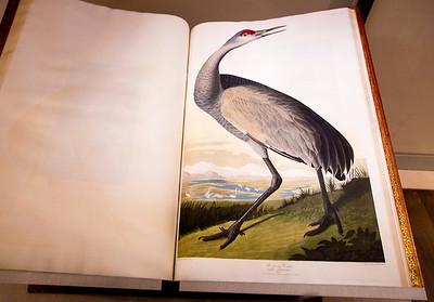 Audubon double-elephant folio Birds of Amerca, open to a picture of a Whooping Crane (which looks more like a Sandhill Crane, to me.)