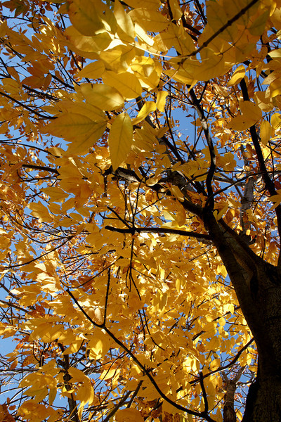 Fall color in tree