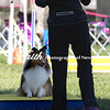 Agility ARC Nationals May 15 2017MelissaFaithKnightFaithPhotographyNV_5320