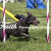 Agility ARC Nationals May 15 2017MelissaFaithKnightFaithPhotographyNV_6252