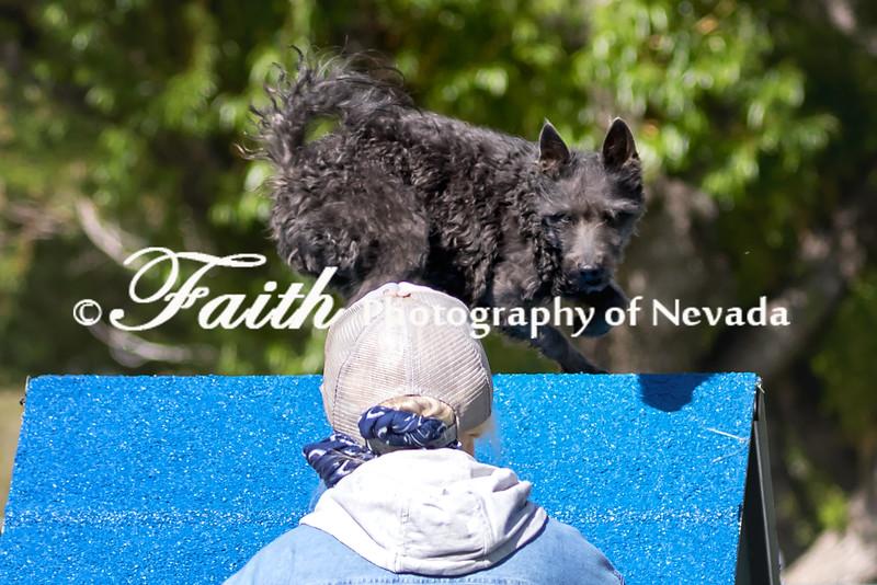 Agility ARC Nationals May 15 2017MelissaFaithKnightFaithPhotographyNV_6231