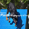 Agility ARC Nationals May 15 2017MelissaFaithKnightFaithPhotographyNV_6318