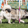 Agility ARC Nationals May 15 2017MelissaFaithKnightFaithPhotographyNV_6298