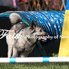 Agility ARC Nationals May 15 2017MelissaFaithKnightFaithPhotographyNV_6286