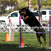 Agility ARC Nationals May 15 2017MelissaFaithKnightFaithPhotographyNV_6432