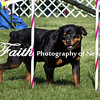 Agility ARC Nationals May 15 2017MelissaFaithKnightFaithPhotographyNV_6390