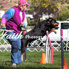 Agility ARC Nationals May 15 2017MelissaFaithKnightFaithPhotographyNV_6426