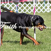 Agility ARC Nationals May 15 2017MelissaFaithKnightFaithPhotographyNV_6479