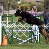 Agility ARC Nationals May 15 2017MelissaFaithKnightFaithPhotographyNV_6503