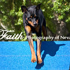 Agility ARC Nationals May 15 2017MelissaFaithKnightFaithPhotographyNV_6442