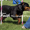 Agility ARC Nationals May 15 2017MelissaFaithKnightFaithPhotographyNV_6413