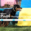 Agility ARC Nationals May 15 2017MelissaFaithKnightFaithPhotographyNV_6458