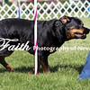 Agility ARC Nationals May 15 2017MelissaFaithKnightFaithPhotographyNV_6399
