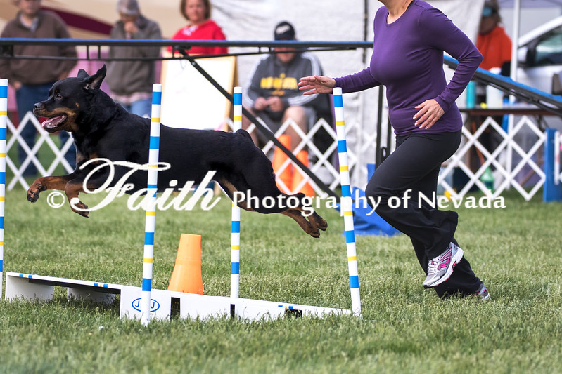Agility ARC Nationals May 15 2017MelissaFaithKnightFaithPhotographyNV_6773