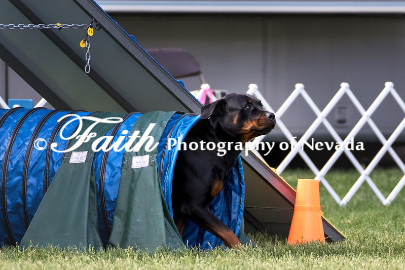 Agility ARC Nationals May 15 2017MelissaFaithKnightFaithPhotographyNV_6980