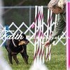 Agility ARC Nationals May 15 2017MelissaFaithKnightFaithPhotographyNV_6924