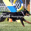Agility ARC Nationals May 15 2017MelissaFaithKnightFaithPhotographyNV_6934