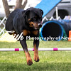Agility ARC Nationals May 15 2017MelissaFaithKnightFaithPhotographyNV_7007